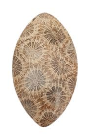 corail-fossile-d-agate-starlight